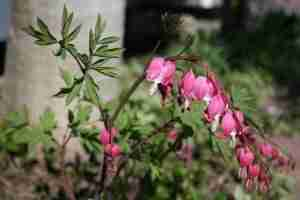 Bleeding Heart 3